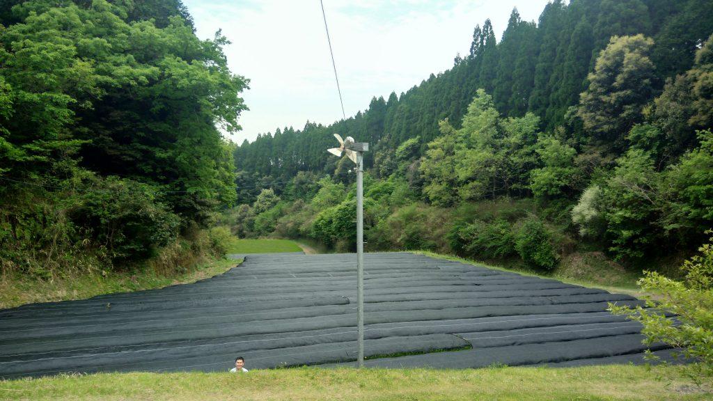 Organic Tea Farm Tour In Kirishima